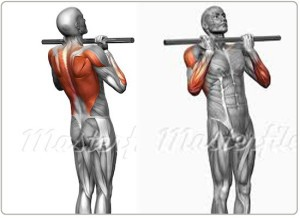 Strength training program design the definitive guide for Plank muscles worked diagram